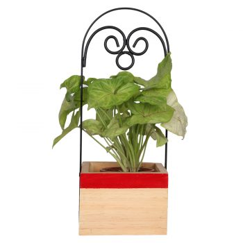 Gift a planter - Red